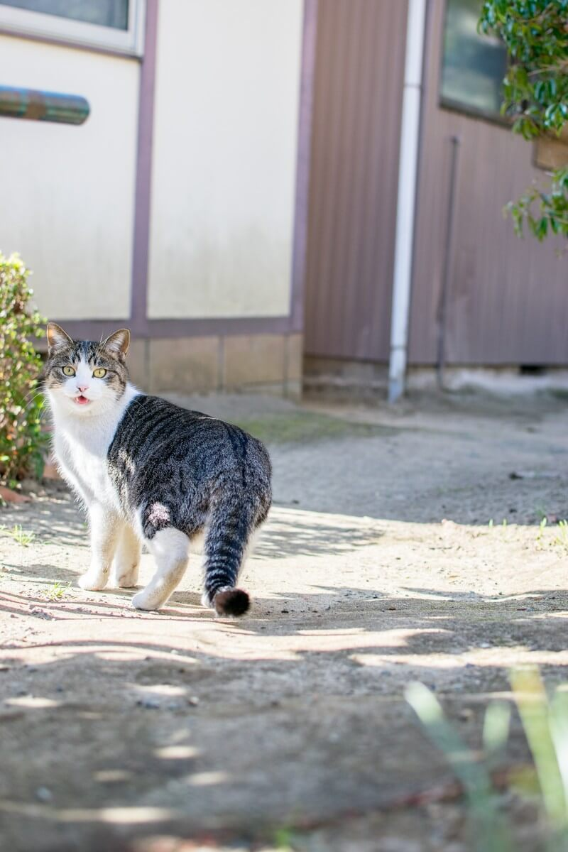 22猫の足跡