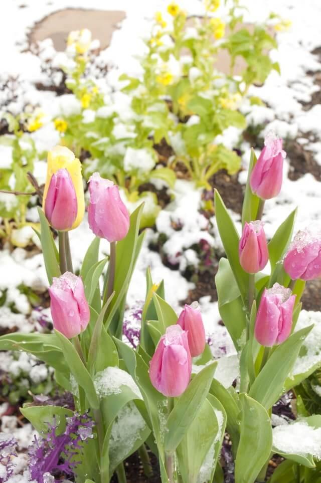 6ピンクの花